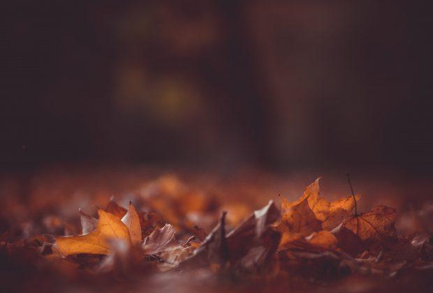 Jesień to najlepszy moment na laserowe usuwanie żylaków